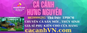 cacanhvn